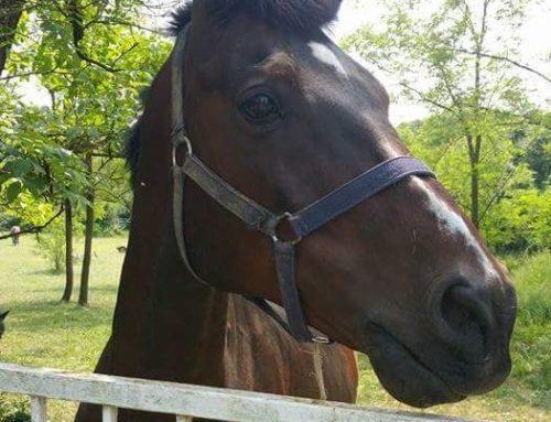 – Cavallo – un amore oltre il tempo