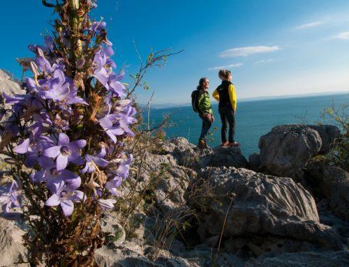 – Alpe Adria Trail – Escursione tra Jamiano (Go) e Sistiana (TS)