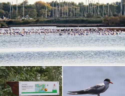 -Riserva Naturale Valle Cavanata-Isola della Cona- Tutti gli orari e le escursioni-