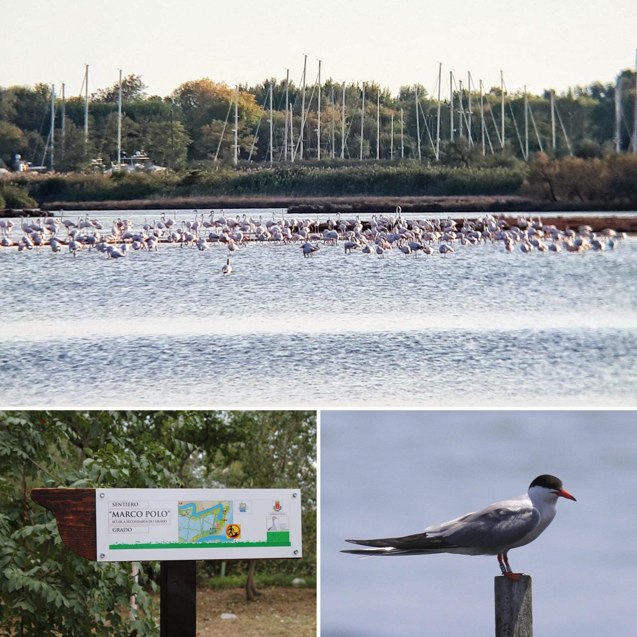 Calendario eventi 2020 nella Riserva naturale Valle Cavanata